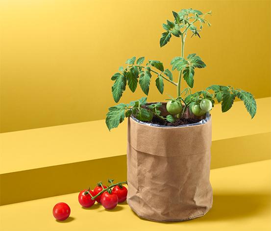 Nasiona pomidorów w papierowym woreczku