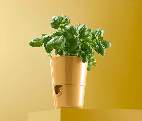 Doniczka na zioła z systemem nawadniania